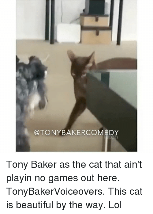 Beautiful, Lol, and Memes: @TONYBAKERCOMEDY Tony Baker as the cat that ain't playin no games out here. TonyBakerVoiceovers. This cat is beautiful by the way. Lol