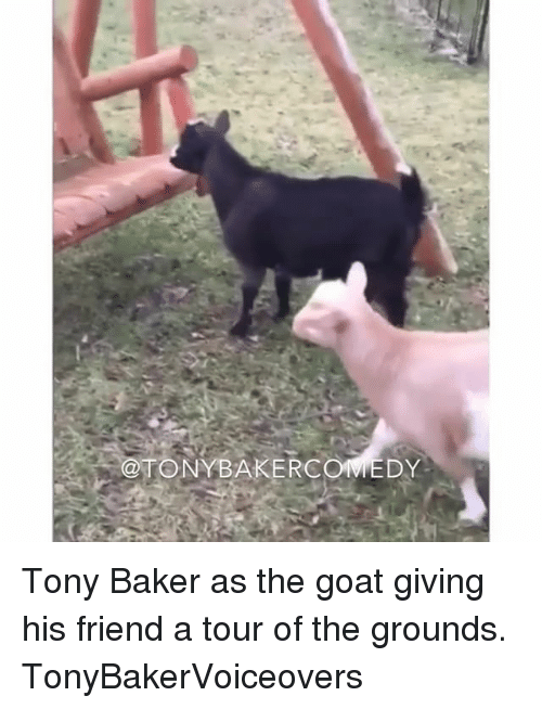Memes, Goat, and 🤖: @TONYBAKERCOVIEDY Tony Baker as the goat giving his friend a tour of the grounds. TonyBakerVoiceovers
