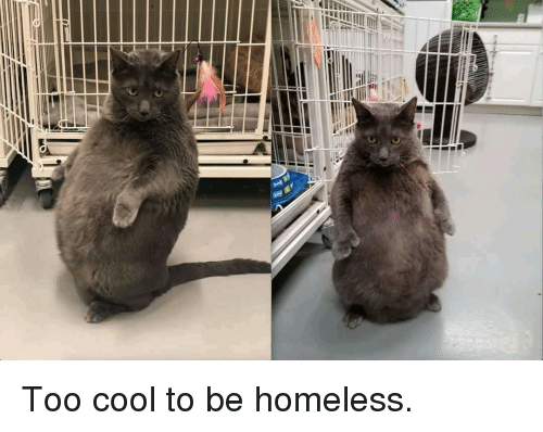 Too Cool: Too cool to be homeless.