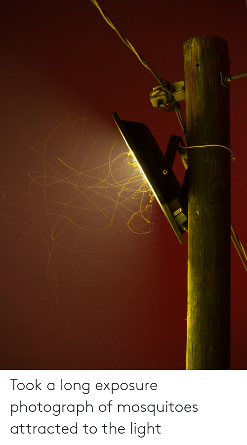 attracted: Took a long exposure photograph of mosquitoes attracted to the light