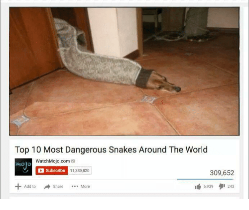 mojos: Top 10 Most Dangerous Snakes Around The World  WatchMojo.com  Mojo  C Subscribe 11,339,820  309,652  Add to  6,939  I 243  Share More