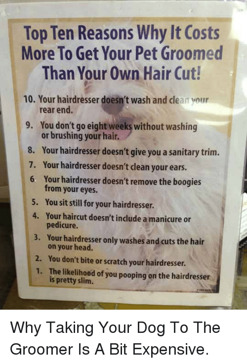 Boogies: Top Ten Reasons Why It Costs  More To Get Your Pet Groomed  Than Your Own Hair Cut!  10. Your hairdresser doesn't wash and clean your  9. You don't go eight weeks without washing  rear end.  or brushing your hair.  8. Your hairdresser doesn't give you a sanitary trim.  7. Your hairdresser doesn't clean your ears.  6  Your hairdresser doesn't remove the boogies  from your eyes.  You sit still for your hairdresser.  Your haircut doesn't include a manicure or  pedicure.  Your hairdresser only washes andeuts the hair  5.  4.  3.  2. You don't bite or scratch your hairdresser  on your head.  1. The likelihood of you pooping on the hairdresser  is pretty slim. <p>Why Taking Your Dog To The Groomer Is A Bit Expensive.</p>