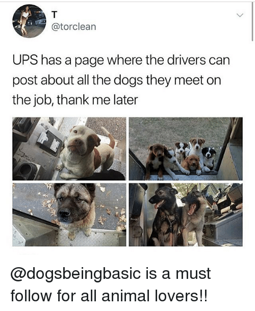 Dogs, Memes, and Ups: @torclean  UPS has a page where the drivers can  post about all the dogs they meet on  the job, thank me later @dogsbeingbasic is a must follow for all animal lovers!!