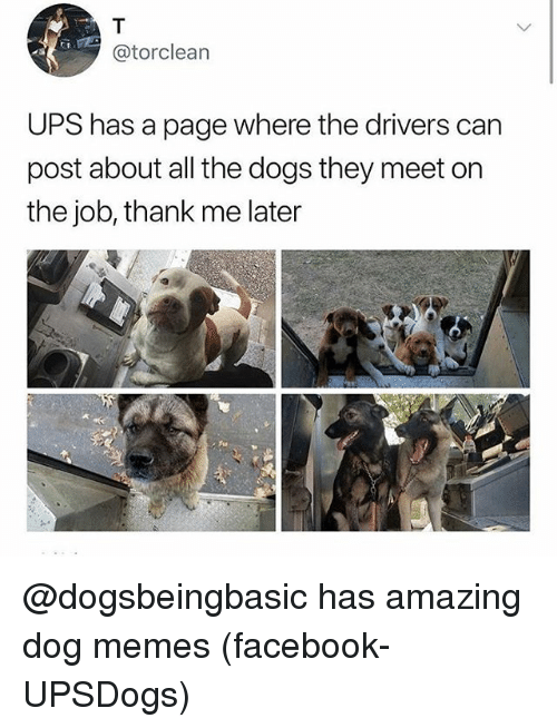 Dogs, Facebook, and Funny: @torclean  UPS has a page where the drivers can  post about all the dogs they meet on  the job, thank me later @dogsbeingbasic has amazing dog memes (facebook-UPSDogs)