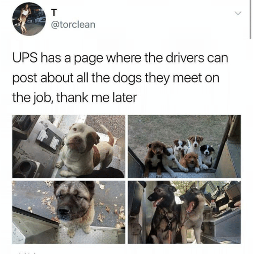 Dogs, Ups, and All The: @torclean  UPS has a page where the drivers can  post about all the dogs they meet on  the job, thank me later