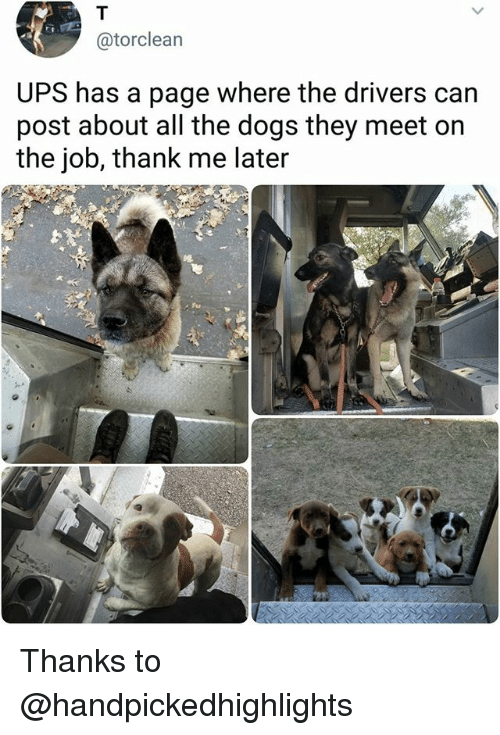 Dogs, Memes, and Ups: @torclearn  UPS has a page where the drivers can  post about all the dogs they meet on  the job, thank me later Thanks to @handpickedhighlights