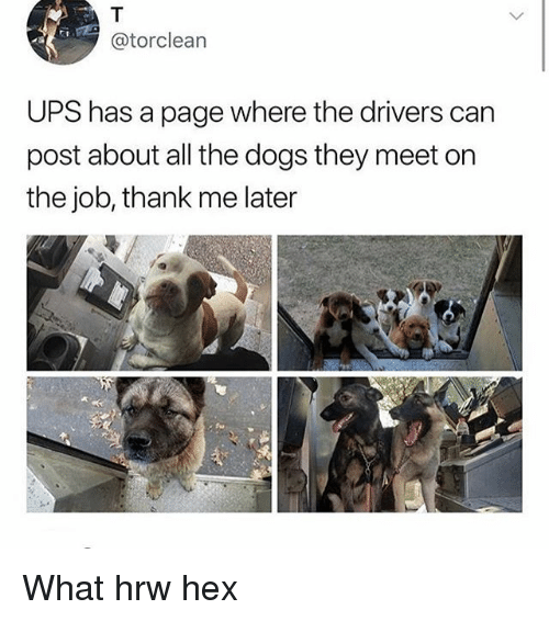 Dogs, Memes, and Ups: @torclearn  UPS has a page where the drivers can  post about all the dogs they meet on  the job, thank me later What hrw hex