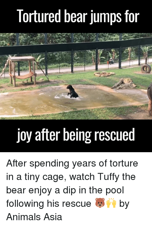 Animals, Anime, and Dank: Tortured bear jumps for  joy after being rescued After spending years of torture in a tiny cage, watch Tuffy the bear enjoy a dip in the pool following his rescue 🐻🙌  by Animals Asia