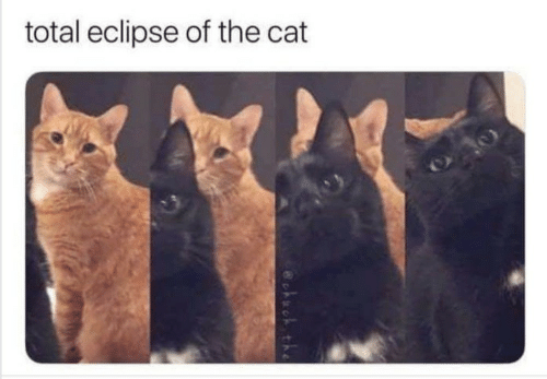 Eclipse: total eclipse of the cat