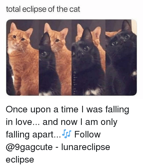 Love, Memes, and Eclipse: total eclipse of the cat Once upon a time I was falling in love... and now I am only falling apart...🎶 Follow @9gagcute - lunareclipse eclipse