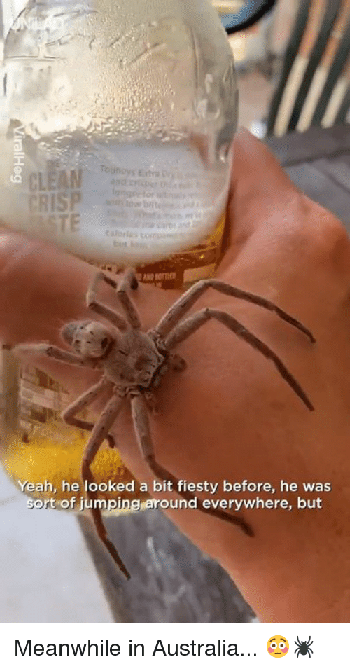 Meanwhile In Australia: Tounoys Exta  CRISP  Cuatles  Yeah, he looked a bit fiesty before, he was  t of jumpingaround everywhere, but Meanwhile in Australia... 😳🕷