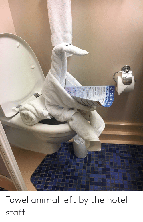 Hotel: Towel animal left by the hotel staff