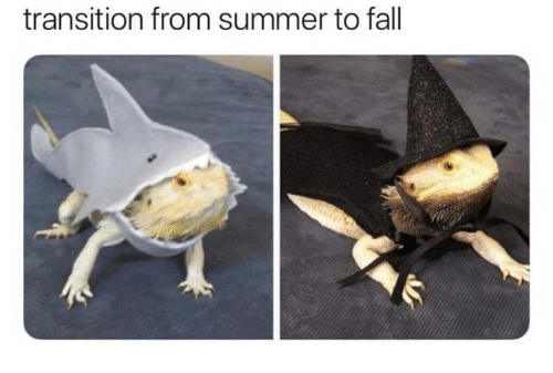 Fall, Summer, and Transition: transition from summer to fall