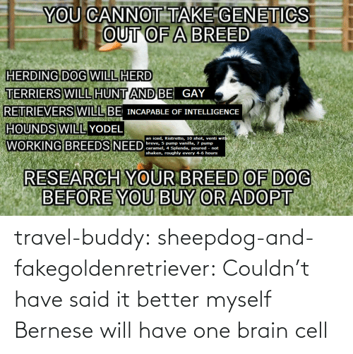 Travel: travel-buddy:  sheepdog-and-fakegoldenretriever:  Couldn't have said it better myself   Bernese will have one brain cell