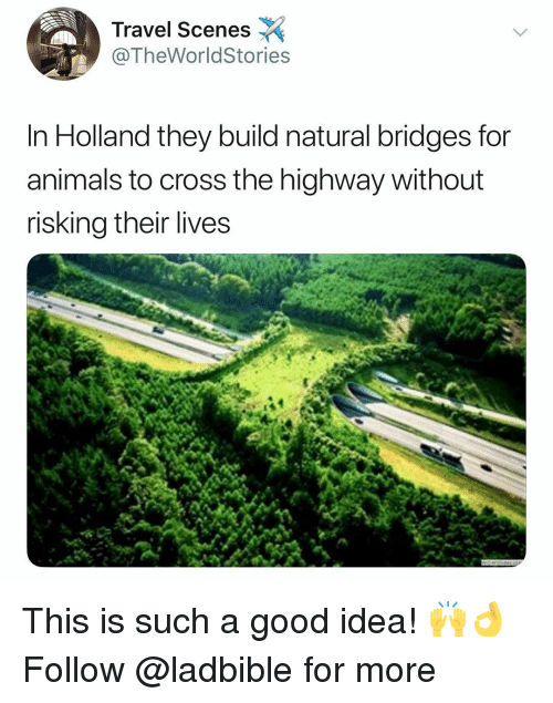 Animals, Memes, and Cross: Travel Scenes  @TheWorldStories  In Holland they build natural bridges for  animals to cross the highway without  risking their lives This is such a good idea! 🙌👌 Follow @ladbible for more
