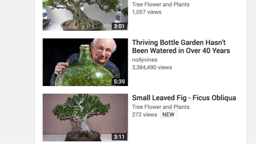 Flower, Tree, and Been: Tree Flower and Plants  1,057 views  3:01  Thriving Bottle Garden Hasn't  Been Watered in Over 40 Years  nollyvines  3,384,490 views  5:39  Small Leaved Fig - Ficus Obliqua  Tree Flower and Plants  272 views NEW
