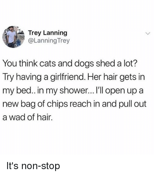 Cats, Dogs, and Memes: Trey Lanning  @Lanning Trey  You think cats and dogs shed a lot?  Try having a girlfriend. Her hair gets in  my bed.. in my shower... I'l open up a  new bag of chips reach in and pull out  a wad of hair. It's non-stop