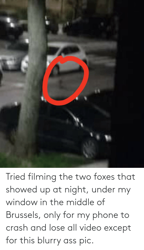 foxes: Tried filming the two foxes that showed up at night, under my window in the middle of Brussels, only for my phone to crash and lose all video except for this blurry ass pic.