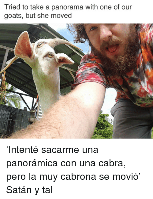 Cabra: Tried to take a panorama with one of our  goats, but she moved <p>'Intenté sacarme una panorámica con una cabra, pero la muy cabrona se movió'<br/></p><p>Satán y tal</p>