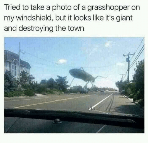 the town: Tried to take a photo of a grasshopper on  my windshield, but it looks like it's giant  and destroying the town