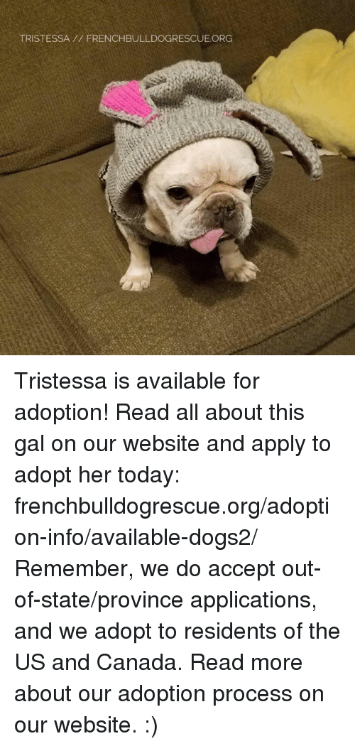 us-and-canada: TRISTESSA FRENCHBULLDOGRESCUE.ORG Tristessa is available for adoption! Read all about this gal on our website <location, likes, dislikes> and apply to adopt her today: frenchbulldogrescue.org/adoption-info/available-dogs2/  Remember, we do accept out-of-state/province applications, and we adopt to residents of the US and Canada. Read more about our adoption process on our website. :)
