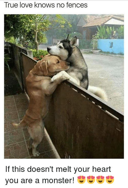 Love, Memes, and Monster: True love knows no fences If this doesn't melt your heart you are a monster! 😍😍😍😍