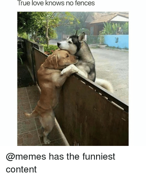 Funny, Love, and Memes: True love knows no fences @memes has the funniest content