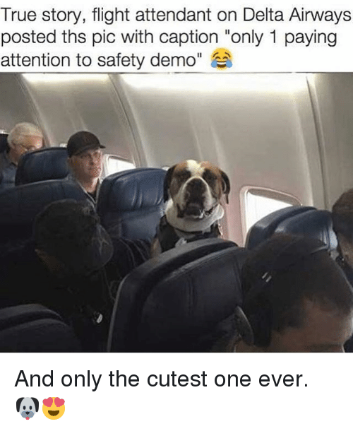 """True, Delta, and Flight: True story, flight attendant on Delta Airways  posted ths pic with caption """"only 1 paying  attention to safety demo"""" And only the cutest one ever. 🐶😍"""