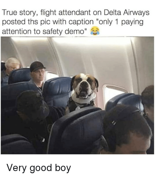 """demo: True story, flight attendant on Delta Airways  posted ths pic with caption """"only 1 paying  attention to safety demo"""" Very good boy"""