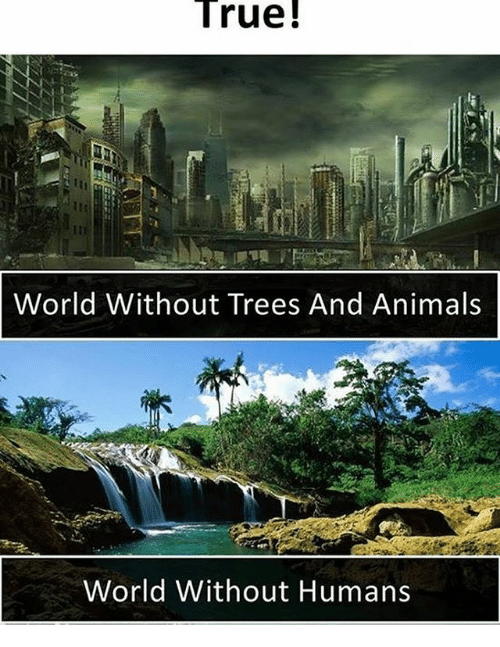 world without trees Our existing forests and the trees we plant work in tandem to make a better world but i dare say that trees are without cooling shade from trees can.