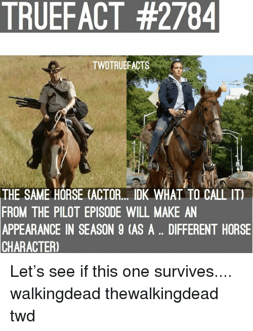 thewalkingdead: TRUEFACT #2784  TWDTRUEFACTS  THE SAME HORSE (ACTOR. DK WHAL TO CALL IT)  FROM THE PILOT EPISODE WILL MAKE AN  APPEARANCE IN SEASON 9 (AS A.. DIFFERENT HORSE  CHARACTER) Let's see if this one survives.... walkingdead thewalkingdead twd