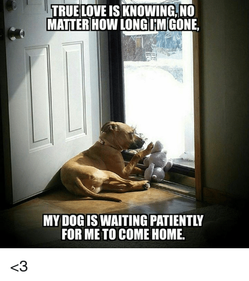 Waiting Patiently: TRUELOVE  IS  KNOWING  NO  MATTER HOW LONG LIMGONE,  MY DOG IS WAITING PATIENTLY  FOR ME TO COME HOME. <3