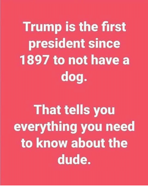 Dude, Memes, and Trump: Trump is the first  president since  1897 to not have a  dog.  That tells you  everything you need  to know about the  dude.