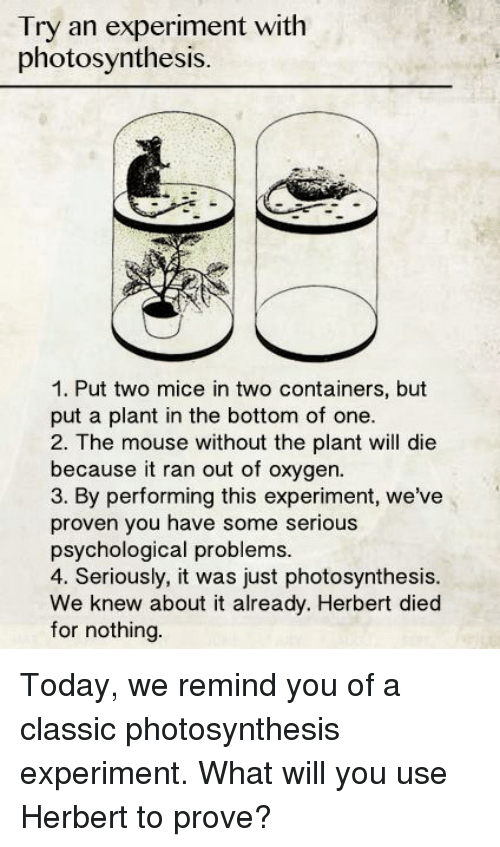 an experiment with photosynthesis Experiments on photosynthesis in intermittent light have been made on two  occasions brown and escombe, in 1905, made use of a rotating sector to study  the.