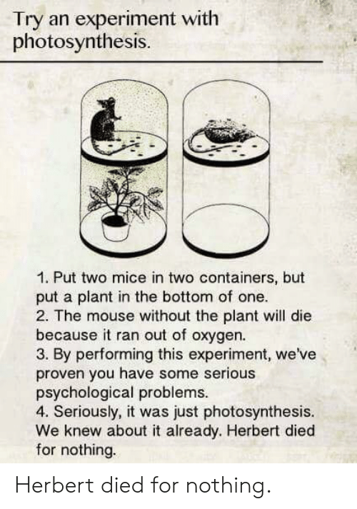 Photosynthesis: Try an experiment with  photosynthesis.  1. Put two mice in two containers, but  put a plant in the bottom of one  2. The mouse without the plant will die  because it ran out of oxygen.  3. By performing this experiment, we've  proven you have some serious  psychological problems  4. Seriously, it was just photosynthesis.  We knew about it already. Herbert died  for nothing. Herbert died for nothing.