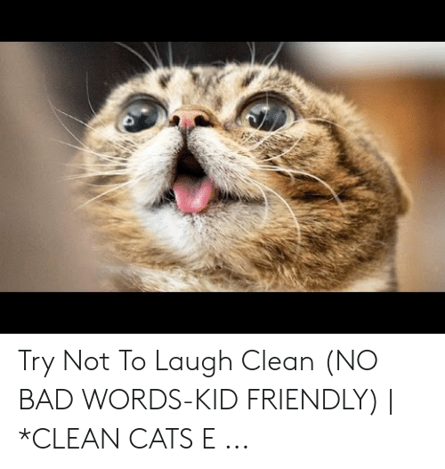 Try Not To Laugh Memes Clean: Try Not To Laugh Clean (NO BAD WORDS-KID FRIENDLY) | *CLEAN CATS E ...