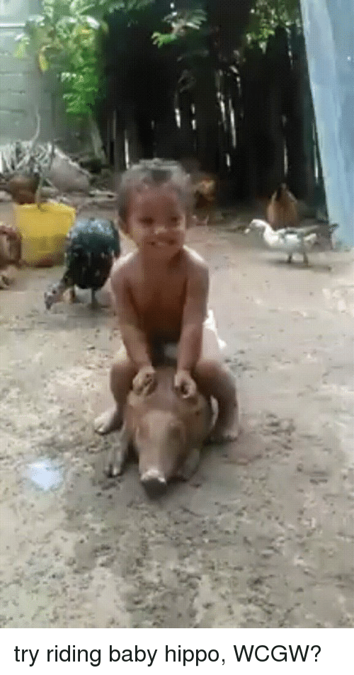 try riding baby hippo wcgw 3258283 search baby feet memes on me me