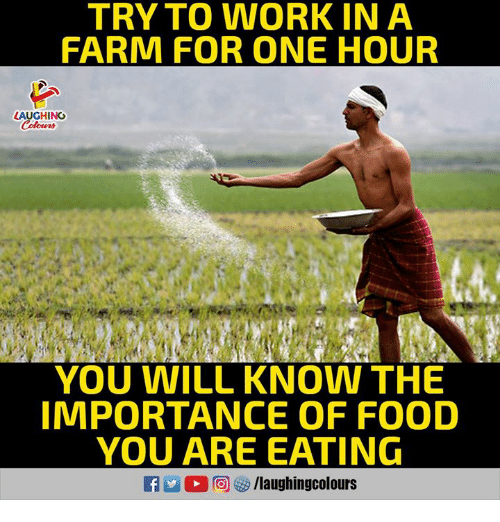 Food, Work, and Indianpeoplefacebook: TRY TO WORK IN A  FARM FOR ONE HOUR  LAUGHING  YOU WILL KNOW THE  IMPORTANCE OF FOOD  YOU ARE EATING
