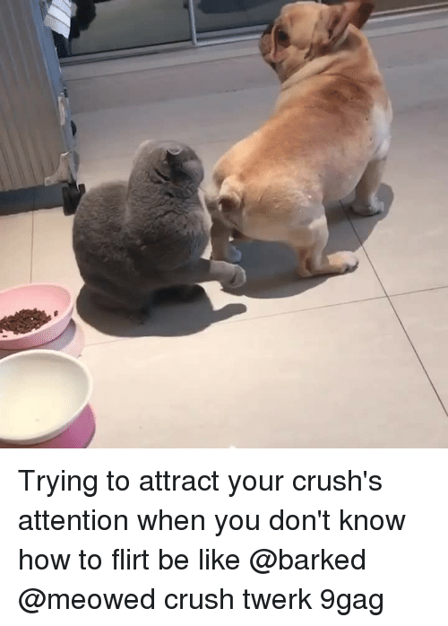 Twerk: Trying to attract your crush's attention when you don't know how to flirt be like⠀ @barked @meowed crush twerk 9gag