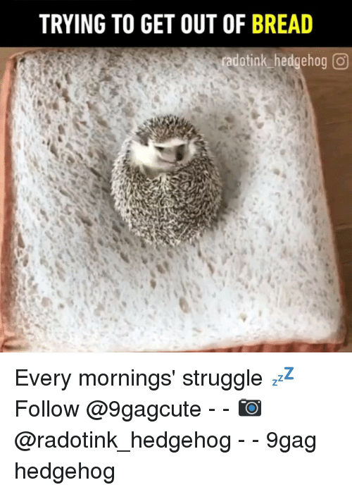 9gag, Memes, and Struggle: TRYING TO GET OUT OF BREAD  dotink hedgehog Every mornings' struggle 💤 Follow @9gagcute - - 📷@radotink_hedgehog - - 9gag hedgehog