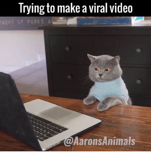 Memes, 🤖, and Make A: Trying to make a viral video  VENT GF PARKS  @Aarons Animals