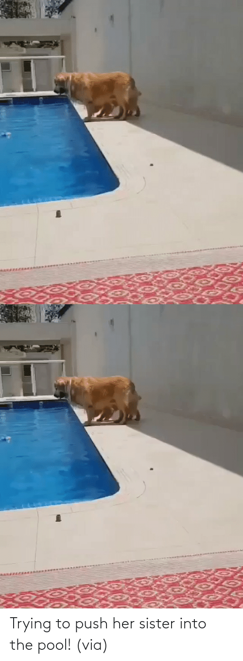 Into: Trying to push her sister into the pool! (via)