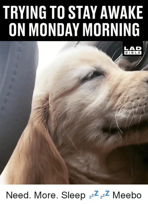 Dank, Bible, and Monday: TRYING TO STAY AWAKE  ON MONDAY MORNING  LAD  BIBLE Need. More. Sleep 💤💤  Meebo