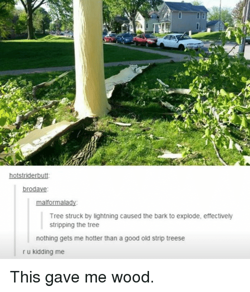Memes, Good, and Lightning: tstr  brodave:  alformalad  Tree struck by lightning caused the bark to explode, effectively  stripping the tree  nothing gets mee hotter than a good old strip treese  r u kidding me This gave me wood.