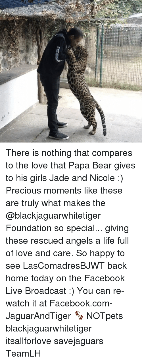 papa bear: ttCM There is nothing that compares to the love that Papa Bear gives to his girls Jade and Nicole :) Precious moments like these are truly what makes the @blackjaguarwhitetiger Foundation so special... giving these rescued angels a life full of love and care. So happy to see LasComadresBJWT back home today on the Facebook Live Broadcast :) You can re-watch it at Facebook.com-JaguarAndTiger 🐾 NOTpets blackjaguarwhitetiger itsallforlove savejaguars TeamLH