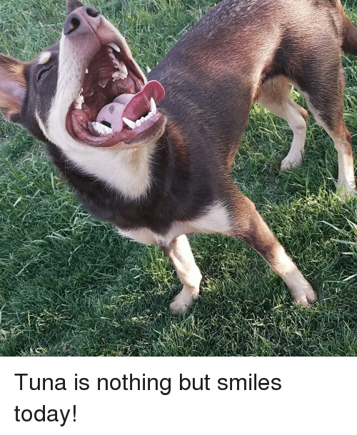 Fish, Smile, and Today: Tuna is nothing but smiles today!