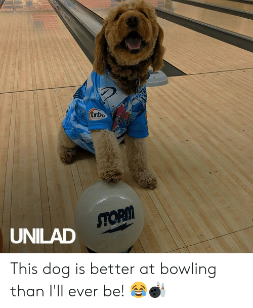 Bowling: Turbo  ENFLS  STORM  UNILAD This dog is better at bowling than I'll ever be! 😂🎳