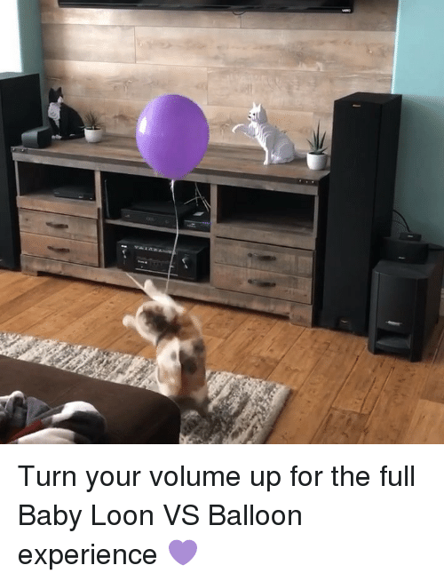 Volume Up: Turn your volume up for the full Baby Loon VS Balloon experience 💜