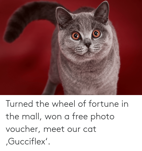 wheel of fortune: Turned the wheel of fortune in the mall, won a free photo voucher, meet our cat 'Gucciflex'.