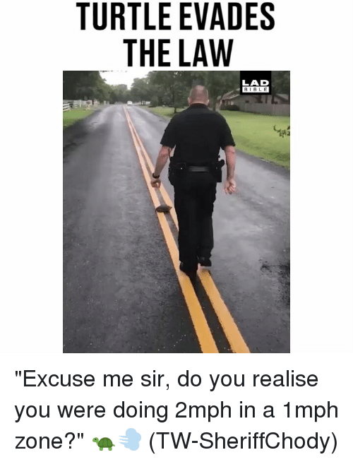 "Memes, Bible, and Turtle: TURTLE EVADES  THE LAW  LAD  BIBLE ""Excuse me sir, do you realise you were doing 2mph in a 1mph zone?"" 🐢💨 (TW-SheriffChody)"